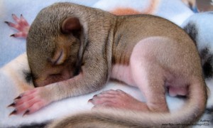 Newborn Squirrel