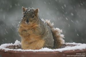 Bulky Squirrel