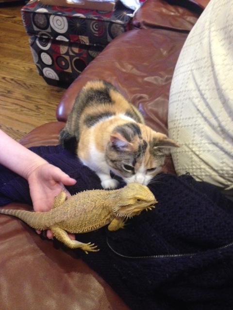 Holly's pets